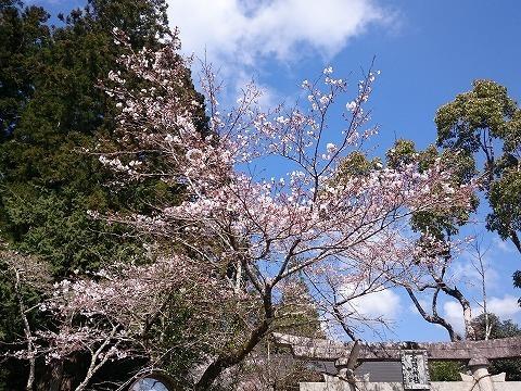 20-03-25-10-09-22-564_photo.jpg